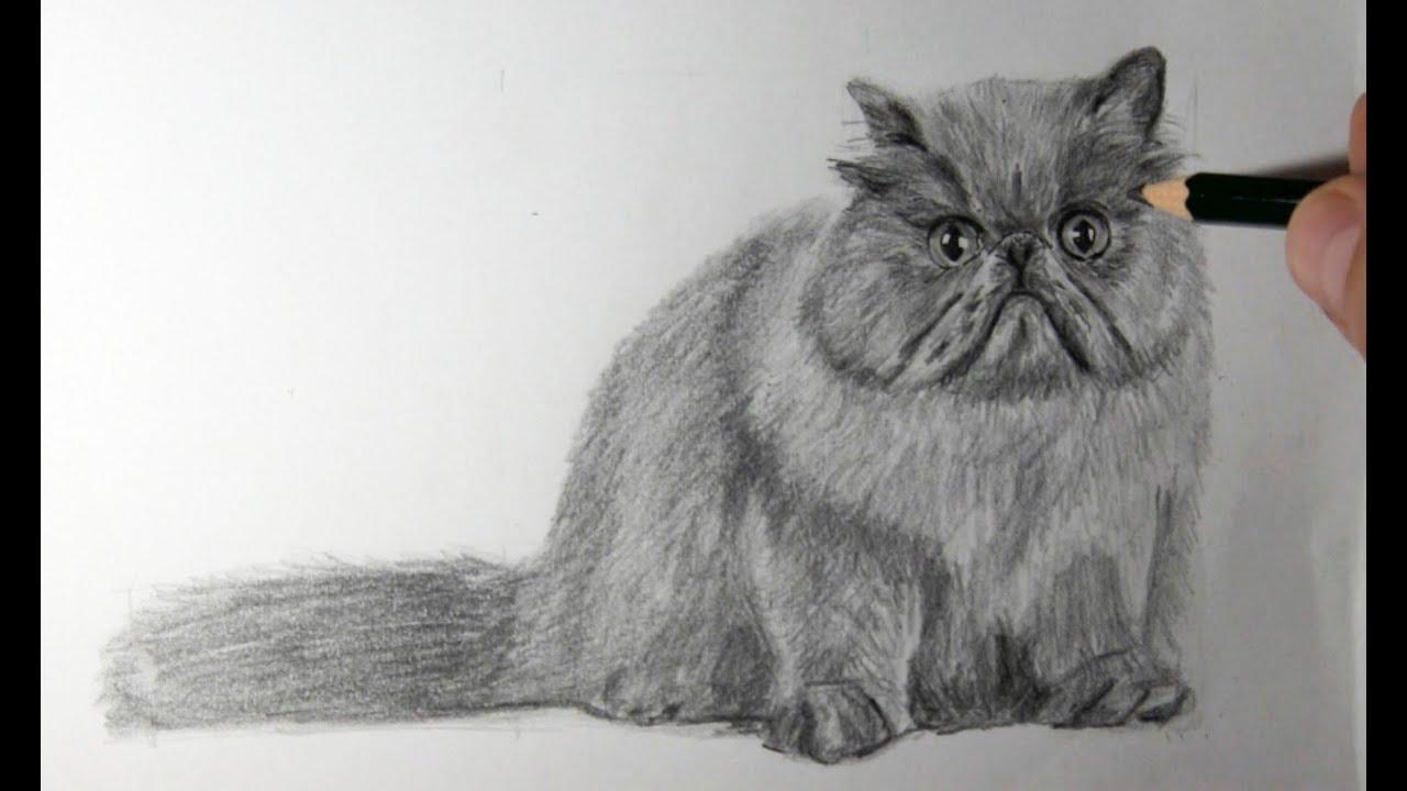 Dibujo Lapiz Gato Dibujo de Gato Persa a Lápiz