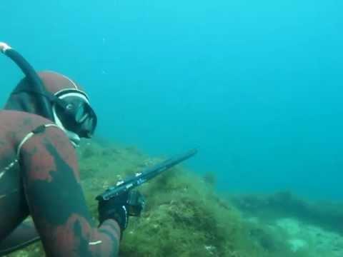 Bluefish - γοφάρι