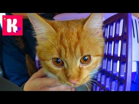 Кошечка Мурка и Катя едут в Котокафе на кошачью вечеринку Много кошек и котята играют с детками