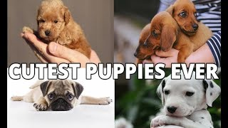 These 10 Dogs Have The Cutest Puppies Ever |Cutest puppies ever| pets & animals point: