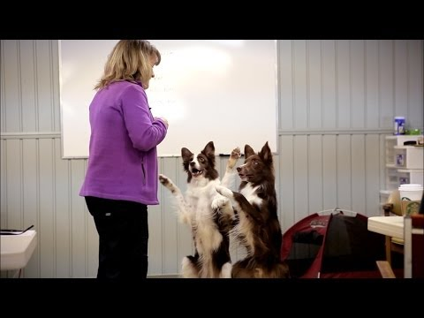 Finding Dog Training Solutions By Breaking The Rules video