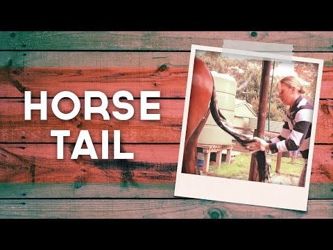 How To Prepare Your Horses Tail
