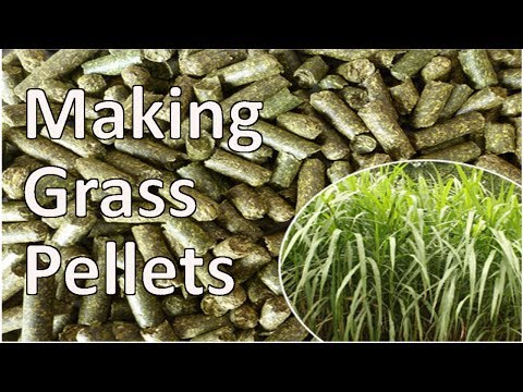 Grass Pellet Plant Making Biomass Fuel Pellets