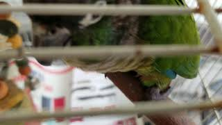 Funny animals. Curious conure.