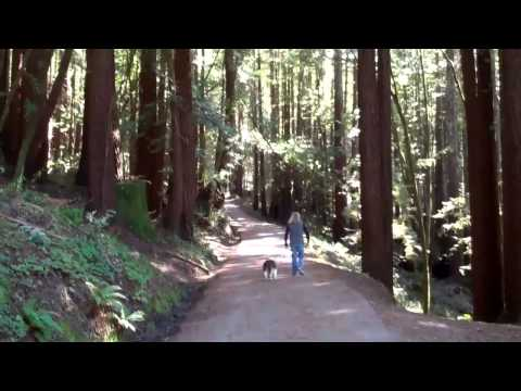Henry Cowell Redwoods State Park in Santa Cruz Mountains