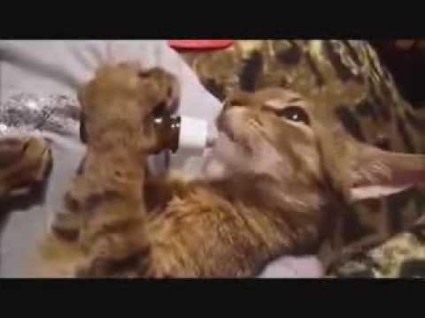 кошки видео смешное смотреть: