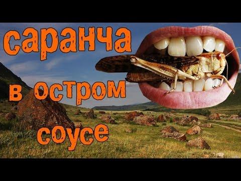 blyadskaya-sarancha-turisti