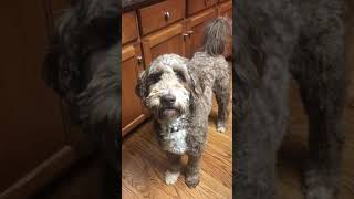 Funny Dog Video