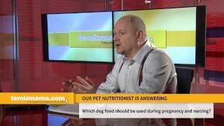 Which dog food should be used during pregnancy and nursing?