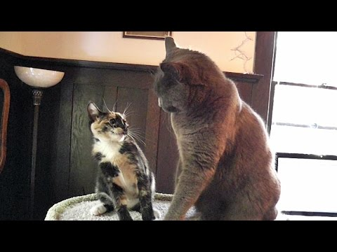 Cats vs kittens an epic cat tree battle youtube for Epic cat tree