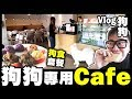 【Vlog】狗狗專用Cafe 😍 好多狗一齊玩一齊打交