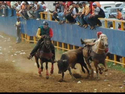 toros coleados (recopilacion)