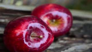 Can 'an apple a day keep the doctor away'? - Health Report (HD)