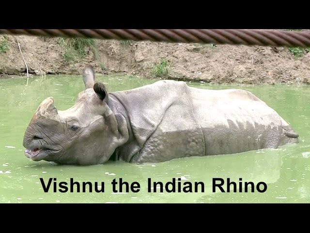 Up close with an Indian Rhino