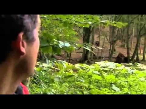 A Túlélés Törvényei - Erdélyi barnamedve (Ultimate Survival - Brown Bear in Transilvania)