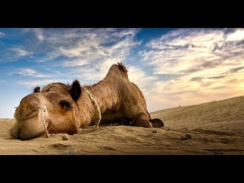 India desert adventure trip