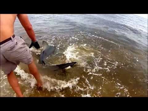 Alligator Point Shark Fishing 2013