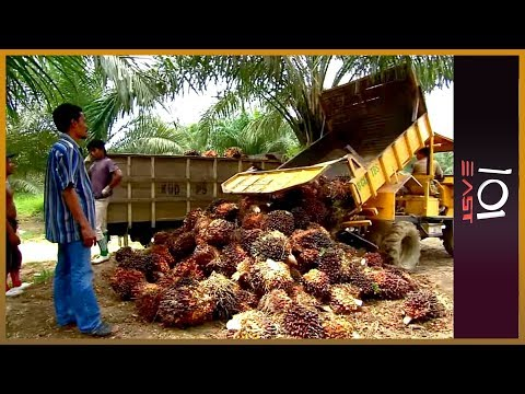 101 East - The price of palm oil