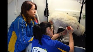 Dog Wash and Grooming Training & Support | Blue Wheelers Franchises