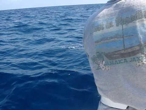 California tourism info san diego deep sea for Deep sea fishing san diego california