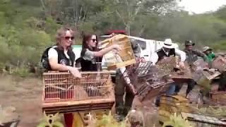 Cena de soltura de centenas de pássaros apreendidos viraliza; assista