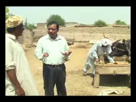Dairy Hub: A community Dairy Development Programme