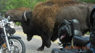 Sturgis 2013 Buffalo Stampede at Custer State Park 02:43