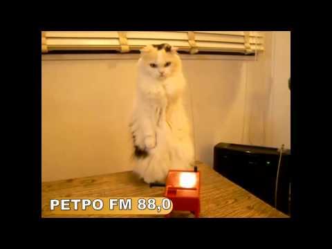 Кот слушает РЕТРО FM
