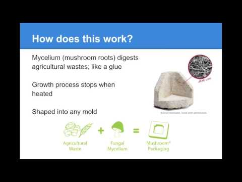 Product Innovation- Mushroom Packaging
