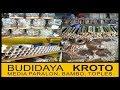 Budidaya Kroto Media PARALON, TOPLES dan BAMBU ( Full Materi) - fauzzan daily thumbnail