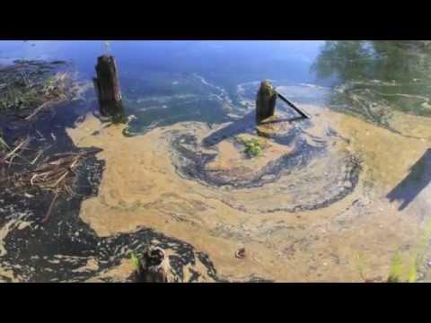 Crooked River Oil Spill - Alanson, MI