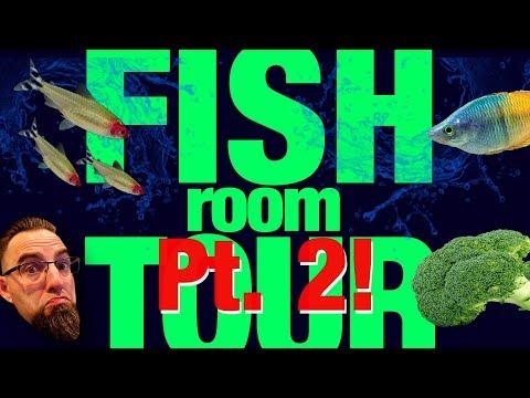 Fish Room Tour Pt.  2!