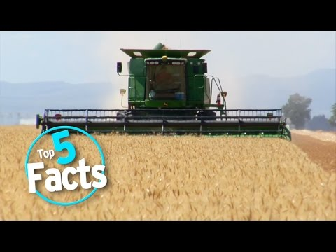 Top 5 Essential Organic Food Facts