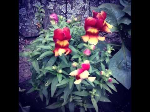 #TagStaGram.app #flower #blossom #nature #plant #plants #beautiful #color #colour #pretty #udog_fl