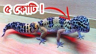 দেখে নিন পৃথিবীর সবচেয়ে মূল্যবান প্রাণীগুলো! || Most expensive animals! Part-1