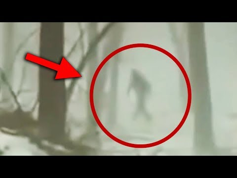 10 Compelling Mysterious Pieces Of Bigfoot Footage!
