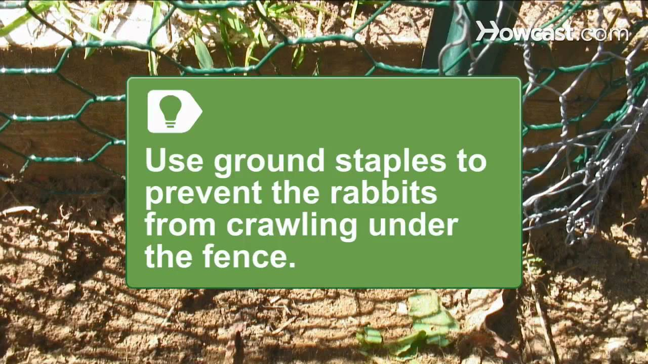 How to install a rabbit proof fence youtube for How to deter rabbits from garden