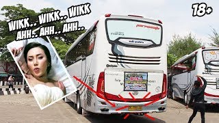 "#VIRAL LAGU THAILAND ""WIK WIK WIK"" Dijadikan Nada Mundur Bus Pariwisata 😂"