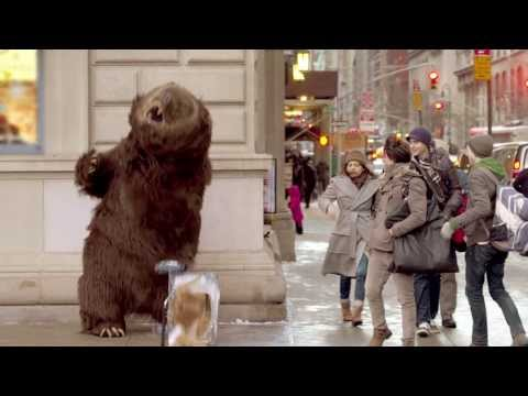 Hungry bear loose in NYC