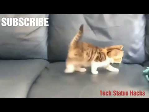 😚😘cute whatsapp status video funny activity of cute cats heart touching 😚😍💖😍