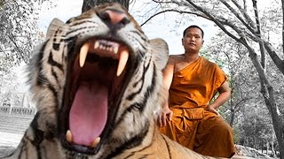 Tiger Temple - Travel in Thailand