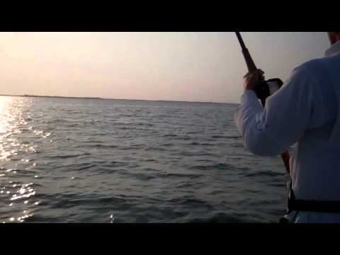Big Shark  - Fishing in Southwest Florida