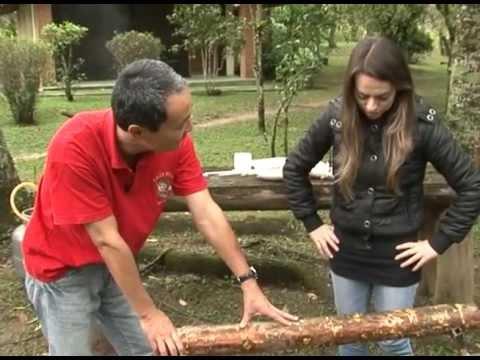 Novo Campo - Cogumelo faz bem para a saúde e emagrece!