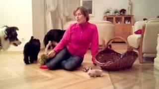 Jak ocalić meble mając szczeniaka? -Pozytywne szkolenie psów