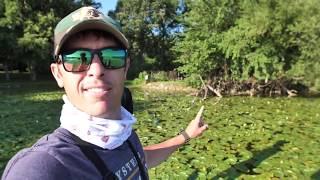 BIG BULLFROGS Led us to Best Bass Fishing Spot