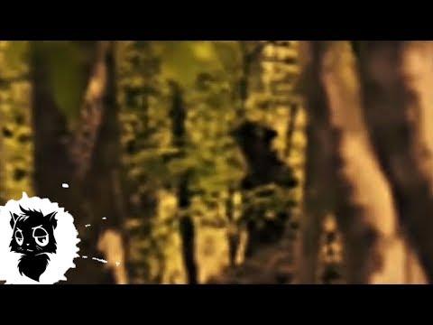 5 МОНСТРОВ НА БОЛОТЕ СНЯТЫХ НА КАМЕРУ [Черный кот]