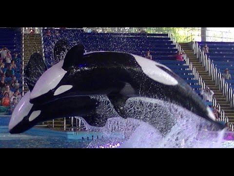 When Orca's won't perform - July 26 2015 - 6pm - SeaWorld San Antonio