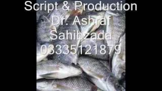 Fish breeds Pakistan audio spot  Dr. Ashraf Sahibzada