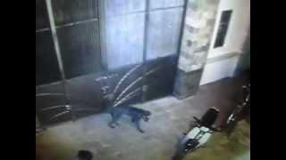 Chó dữ cắn người nhà