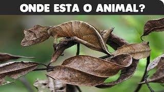 🔴 TESTE: ONDE ESTÃO OS ANIMAIS CAMUFLADOS!!